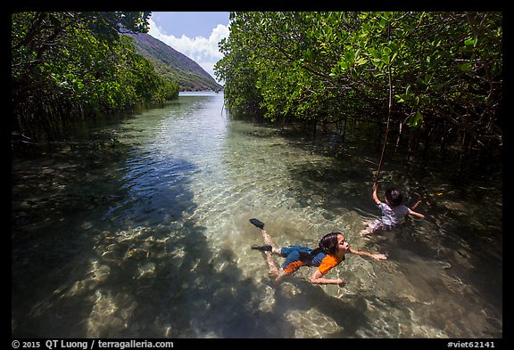 Children swim in mangrove forest, Bay Canh Island, Con Dao National Park. Con Dao Islands, Vietnam (color)