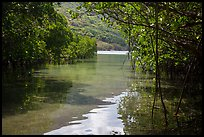 Channel in mangrove forest, Bay Canh Island, Con Dao National Park. Con Dao Islands, Vietnam ( color)