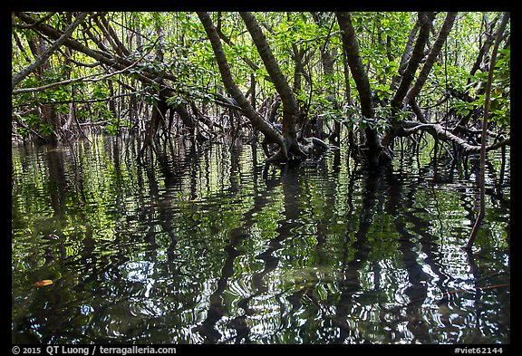 Mangroves and reflections, Bay Canh Island, Con Dao National Park. Con Dao Islands, Vietnam (color)