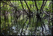 Mangroves and reflections, Bay Canh Island, Con Dao National Park. Con Dao Islands, Vietnam ( color)