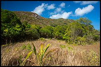 Grasses and dry tropical forest, Bay Canh Island, Con Dao National Park. Con Dao Islands, Vietnam ( color)
