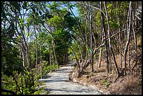 Trail, Bay Canh Island, Con Dao National Park. Con Dao Islands, Vietnam ( color)