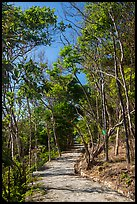 Trail through forest, Bay Canh Island, Con Dao National Park. Con Dao Islands, Vietnam ( color)