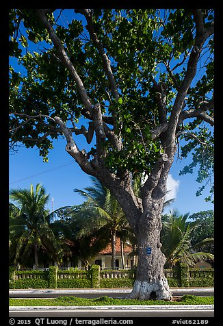 Old tree and colonial-area house, Con Son. Con Dao Islands, Vietnam (color)
