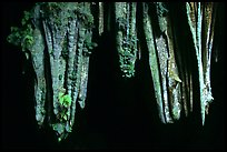 Stalactite in upper Phong Nha Cave. Vietnam (color)