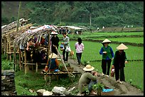 Market set on a dyke amongst rice fields near Ba Be Lake. Northeast Vietnam (color)