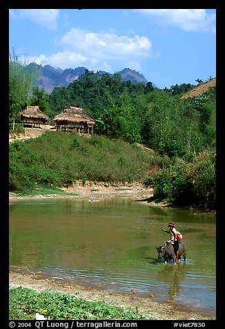 Thai woman riding a water buffalo across a pond near a village, near Tuan Giao. Northwest Vietnam (color)