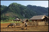 Plowing the fields with a water buffalo, near Tuan Giao. Northwest Vietnam