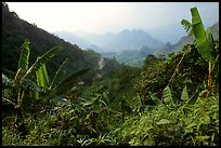 Banana leaves and mountains, between Lai Chau and Tam Duong. Northwest Vietnam ( color)