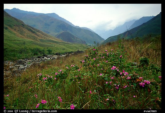 Wildflowers and mountains in the Tram Ton Pass area. Sapa, Vietnam (color)