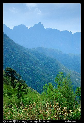 Forests and peaks in the Tram Ton Pass area. Sapa, Vietnam (color)