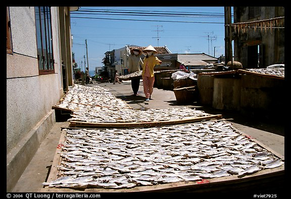 Women carrying a panel of dried fish. Vung Tau, Vietnam (color)