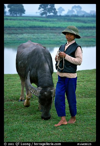 Boy wearing the Boi Doi military hat popular in the North, with water buffalo, near Ninh Binh. Vietnam (color)