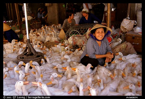 Live ducks for sale, district 6. Cholon, Ho Chi Minh City, Vietnam (color)