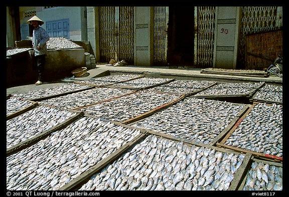Fish being dried. Vung Tau, Vietnam (color)