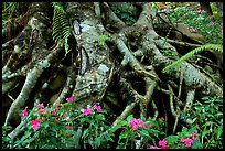Luxuriant vegatation flowers in the town of Eternal Spring. Da Lat, Vietnam (color)