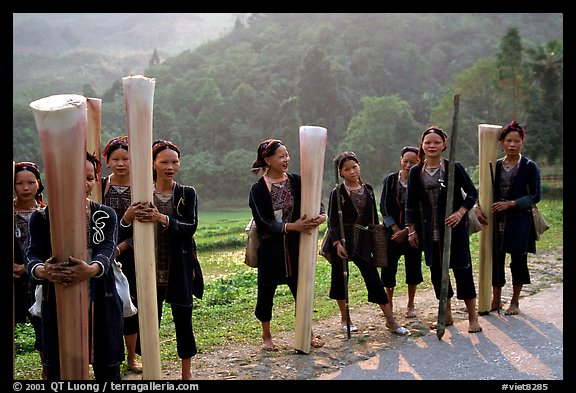 Ethnic minority women carrying banana trunks. Vietnam (color)