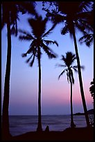 Palm trees swaying in the breeze at sunset. Hong Chong Peninsula, Vietnam ( color)