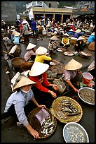 Fish market, Hong Gai. Halong Bay, Vietnam ( color)